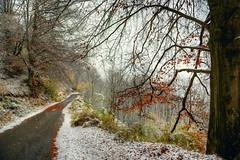 verso l'inverno ... #1 (Roberto Defilippi) Tags: 2018 602018 rodeos robertodefilippi neve snow autunno autumn valpellice tmpanel