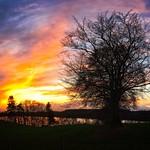 Sonnenuntergang mit Bäumen und See - Belau - Schleswig-Holstein - Deutschland thumbnail