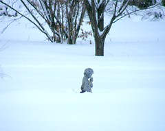 Frozen Cupid (Stanley Zimny (Thank You for 37 Million views)) Tags: frozen cupid winter seasons snow statue art cold white skylands botanical garden nj