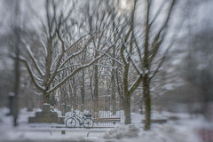 2019 Bike 180: Day 16, February 7 (suzanne~) Tags: munich bavaria germany alternordfriedhof cemetery winter snow tree bike bicycle bench fence oldnorthcemetery lensbaby sol45