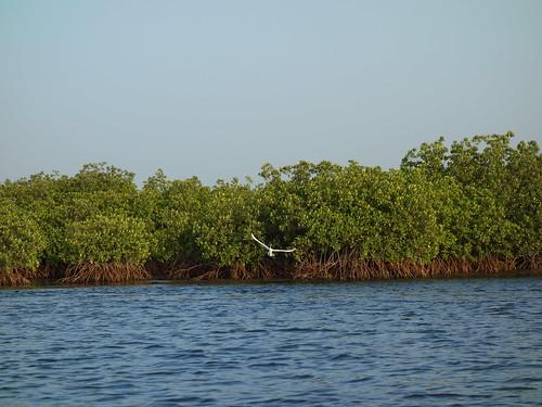 On trouve plein d'oiseaux comme des martins pêcheurs, des merles métalliques, des pélicans ...
