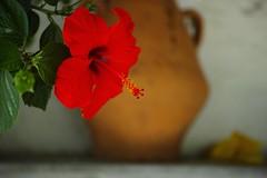 Microcosm (Listenwave Photography) Tags: stilllife nature true colors foveon sigmadp3m greece crete listenwavephotography