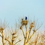 a bird's nest thumbnail
