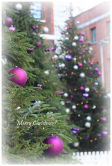 Merry Christmas! (Pat's_photos) Tags: london christmas tree hss