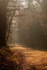 Winter Path (nafenic) Tags: nikon d70 dslr sigma sigma70300 winter woodland rudry rural countryside sunray trees