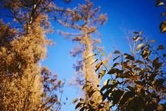 Indian summer Dutch style (Jos Mecklenfeld) Tags: autumn herbst herfst nature natur natuur forest wald bos westerwolde niederlande nederland jipsingboertange groningen netherlands nl sonya6000 sonyilce6000 sel30m35