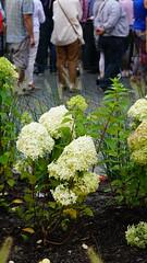 2015-08-16_16-18-25_ILCE-6000_DSC03605 (Miguel Discart (Photos Vrac)) Tags: 2015 90mm belgium bokeh bru brussels bruxelles bxl divers e18200mmf3563 fleurs flowers focallength90mm focallengthin35mmformat90mm ilce6000 iso100 sony sonyilce6000 sonyilce6000e18200mmf3563