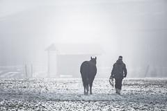 Dans le brouillard (Lucille-bs) Tags: europe france bourgogne bourgognefranchecomté côtedor brouillard cheval homme champ neige hangar
