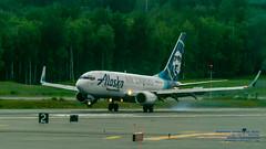 An Alaska Air Cargo Boeing 737-790(BDSF) Touches Down (AvgeekJoe) Tags: 100400mmf563 737 737790bdsf a82c98 alaska alaskaair alaskaaircargo alaskaairlines anchorageinternationalairport boeing737 boeing737790bdsf d5300 dslr msn30793 nikon nikond5300 panc sigma sigma100400mmf563 sigma100400mmf563dgoshsmcontemporary usa aircraftbeacon airport beacon lens smokingtires telephotolens