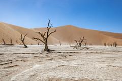 _RJS4651 (rjsnyc2) Tags: 2019 africa d850 desert dunes landscape namibia nikon outdoors photography remoteyear richardsilver richardsilverphoto safari sand sanddune travel travelphotographer animal camping nature tent trees wildlife