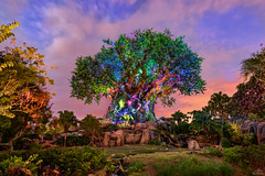 The Colors Of Life (Michael Billick) Tags: waltdisneyworld wdw resorts orlando photography amusementparks animalkingdom disneyphotoblog disneyphotography disneyparks disneyworld florida hdr kissimmee nikon treeoflife nikond810 sunsets
