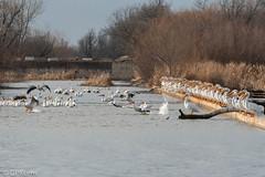 Audience (Gary P Kurns Photography) Tags: myoklahoma onone nikon oklahoma nikond500 water lakeoverholster oklahomacity 200500lens places pelican