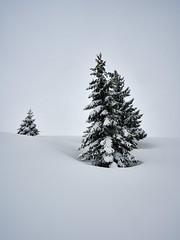 Perfect Harmony (W_von_S) Tags: snowdrift snow snowshoehike schneeschuhwanderung schnee mountains berge alpen alps landschaft landscape paesaggio paysage natur nature trees bäume winter winterlandschaft winterpanorama wintertime februar february 2019 werner wvons sony sonyilce7rm2 hindenburghütte reitimwinkl schneetreiben o
