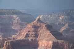 Grand Canyon temples (ramosblancor) Tags: naturaleza nature paisajes landscapes cañón canyon montaña mountain erosión erosion zopilotes vultures luz light templo temple templodeisis isistemple grancañón grandcanyon arizona usa