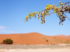 P1107739-LR (carlo) Tags: namibia panasonic dmcg9 g9 africa desert deserto landscape africanlandscape sossusvlei
