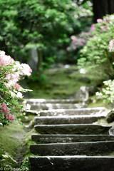 Path Of Least Resistance (esimagecapture) Tags: path oregon japense garden portland stairs nikon d7200 ericsteele photography