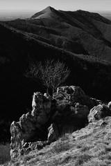 panorama (enrico sprea) Tags: panorama montagne albero rocce sole ombra prato pascolo cornidicanzo prealpi prealpilariane triangololariano lombardia italia valle vallata bwartaward biancoenero blackandwhite monocromo versantedellamontagna versante orizzonte paesaggio terzalpe gajum canzo profilo sentiero trekking traccia camminata boschi foresta alberi cornizzolo cima monte