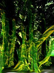 Living Green (TwinLotus II) Tags: maui hawaii trees painnt coolpix coolpixb500 hss