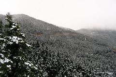 On a winter's day... (Κώστας Καϊσίδης) Tags: exploring orininafpaktia mountainousnafpaktia aitoloakarnania greece hellas winter wintertheme winterscene winterscenery mountain forest firtrees snow cloudy kostaskaisidis canon ngc january