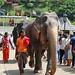 Elephants & Mahouts (IMG_2757b)