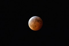 Eclipse of the Super Blood Wolf Full Moon (ladybugdiscovery) Tags: super blood full wolf moon 2019 january 20 eclipse red
