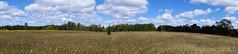 Maybury-State-Park-Pana_Northville-MI_09-15-2011f (Count_Strad) Tags: mayburystatepark maybury state park northville michigan mi fallcolor field