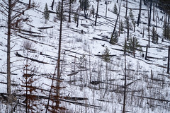 Winter scene of burned trees, remnants of the Sawback Prescribed Burn of 1993, as seen in 2019 along the Bow Valley Parkway in Banff National Park (m01229) Tags: bowvalleyparkway historic peaceful nature frost destination snow trees national panoramic banff burned canada bowvalley canadianrockies valley landscape winter rocky mountains clouds outdoor banffnationalpark winterscene sawbackprescribedburn1993 rockies calm scenic canadian adventure scenery beautiful highway forest alberta travel river park road tourism wilderness mountain