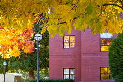 Autumn colors reflected (Barb Henry) Tags: oregoncollegeofeducation westernoregonstatecollege normalschool college university campus almamater fall autumn sunny warm leaves colorful bright flora change transition trees limbs reflections window