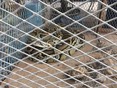 A snake in a cage