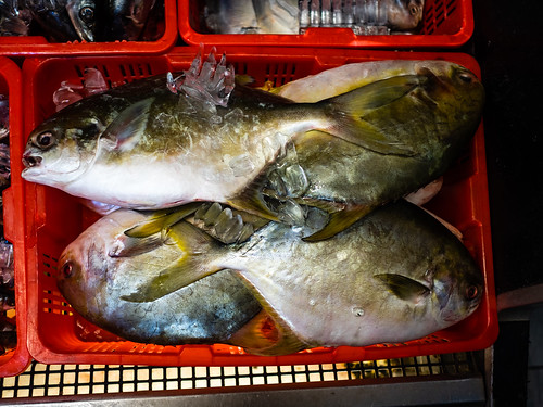 Fresh Seafood at Viet Hoa