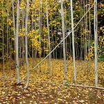 walnut park, surrey, bc thumbnail