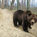"""LiBearty Bear Reservation in Zarnesti, Transylvania (24) • <a style=""""font-size:0.8em;"""" href=""""http://www.flickr.com/photos/131242750@N08/32303334678/"""" target=""""_blank"""">View on Flickr</a>"""