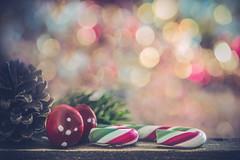 Merry Christmas everybody! (Ro Cafe) Tags: candycanes christmas christmasornaments holidaybokeh holidays mm macro macromondays merrychritsmas nikkor105mmf28 sonya7iii bokeh festive