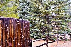 Let it snow (thomasgorman1) Tags: fence snow winter snowing nikon outdoors az arizona flagstaff pine trees ponderosa forest