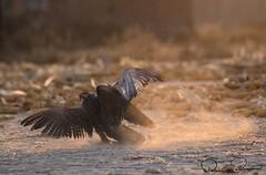 IMG-20171229-WA0025 (TARIQ HAMEED SULEMANI) Tags: sulemani tariq tourism trekking tariqhameedsulemani winter wildlife wild birds nature nikon