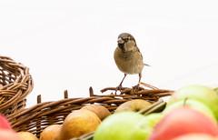 Birdy :) (ana_kapetan_design) Tags: bird animal birdie birds