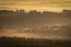 forest series #168 (Stefan A. Schmidt) Tags: warstein nordrheinwestfalen deutschland de sun germany sunbeam sunbeams fog mist dust ethereal golden goldenhour