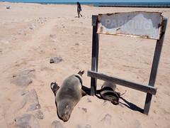 P1096482-LR (carlo) Tags: namibia africa panasonic g9 dmcg9 skeletoncoast coast atlanticcoast capecross cabodacruz seal seals otarie foche
