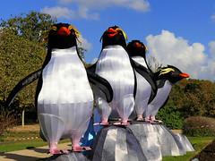 Grand pingouin (Raymonde Contensous) Tags: paris jardindesplantes espècesenvoiedillumination lanternesjaponaises insolite exposition animaux faune nature grandpingouin
