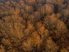 DJI_0561 (Alessandro Censi) Tags: canfaito landscape drone dji mavicpro bosco tramonto sunset alberi goldenhour sanseverinomarche provinciadimacerata italia it
