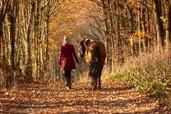Autumn walk (buba_noi) Tags: horse autumn forest