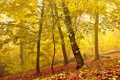 Bosco in autunno (Marco Allegro) Tags: italy