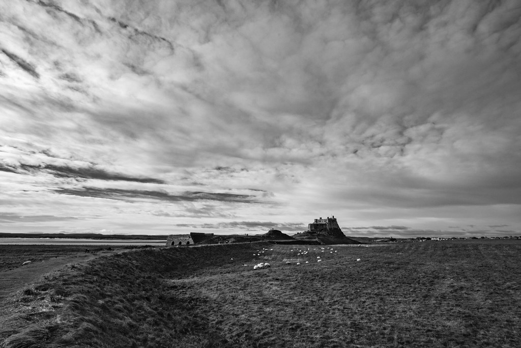 Sheep and Lindisfarne Castle