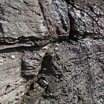 Limestone (Mill Knob Member, Slade Formation, Upper Mississippian; Clack Mountain Road Outcrop, south of Morehead, Kentucky, USA) 7 thumbnail