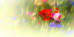 6176TS Wildflowers (foxxyg2) Tags: flowers art abstract red topaz topazsoftware topazstudio niksoftware aperture dxo analogefexpro2 flora