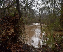 Rain Swollen (phthaloblu) Tags: flooding nepark northeastpark guilfordcounty gibsonville northcarolina nc reedyforkcreek water trees leaves rain cold