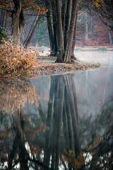 Thiergartenweiher (janeway1973) Tags: thiergartenweiher deutschland hessen büdingen germany pond lake see teich bäume wald trees forest morning morgen fog mist nebel dunst foliage herbstlaub autumn leaves colorful bunt farbenfroh herbst november spiegelung reflection water wasser