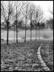 Io sono la Via, La Verità e la Vita (Gv 14,6) (claudiobertolesi) Tags: claudiobertolesi bruzzano bw bosco milano strada nebbia primavera italia albero vangelodigiovanni lombardia