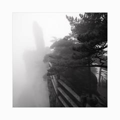 Still flying (Frans van Hoogstraten) Tags: huangshanmountain yellowmountain china anhui peak pine pinetree zeiss zm biogon 21mm zeiss21mmf45zm m10p leica handheld misty mist blackandwhite rain monochrome rock stone rangefinder