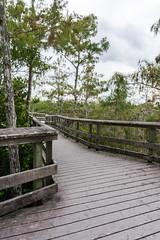 Pa-Hay-Okee Trail, Everglades National Park, Nov. 2018 (JenniferHuber) Tags: findyourpark lovefl evergladesnationalpark